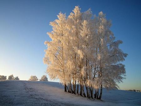 frozen trees - Winter Wallpaper 965744 - Desktop Nexus Nature