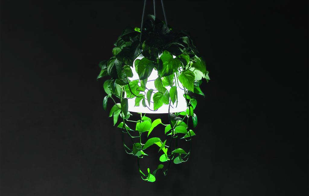 Plant Lamp – Nonlinear Studio