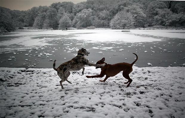 wimbledon-dogs_2134620i.jpg (620×396)
