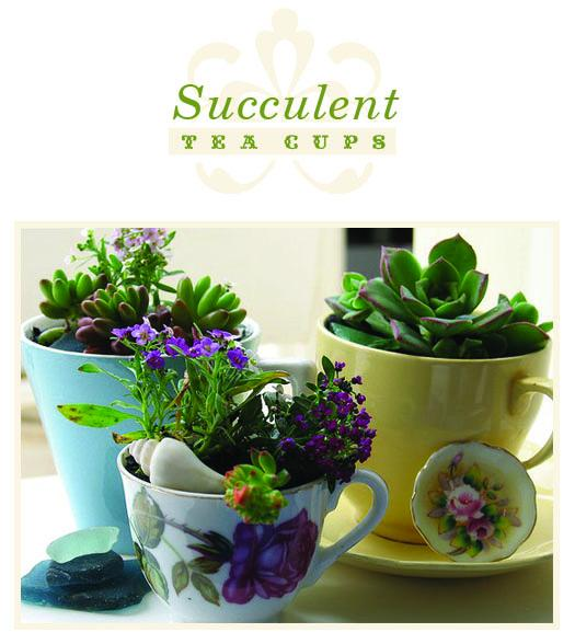 More Design Please - MoreDesignPlease - DIY: Succulent Tea Cups