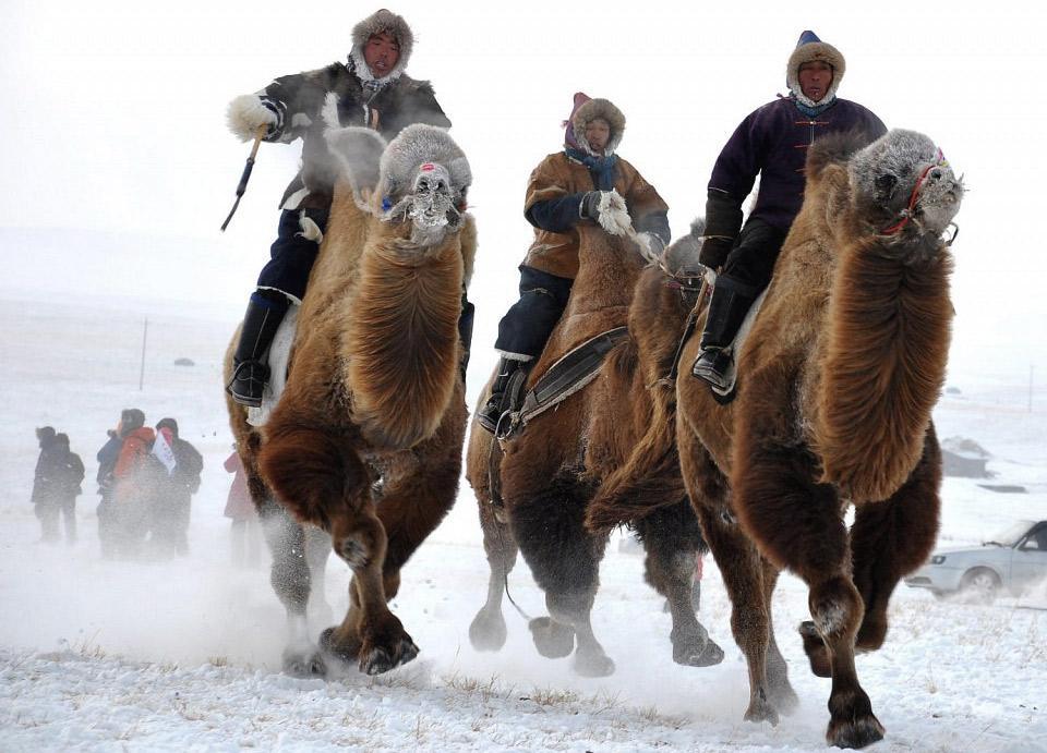 camel-races-mongolia.jpg (960×691)