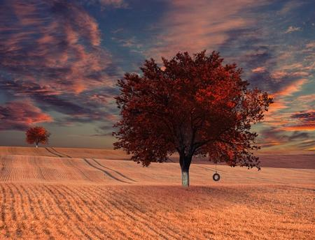 place of relaxation - Fields Wallpaper 967754 - Desktop Nexus Nature