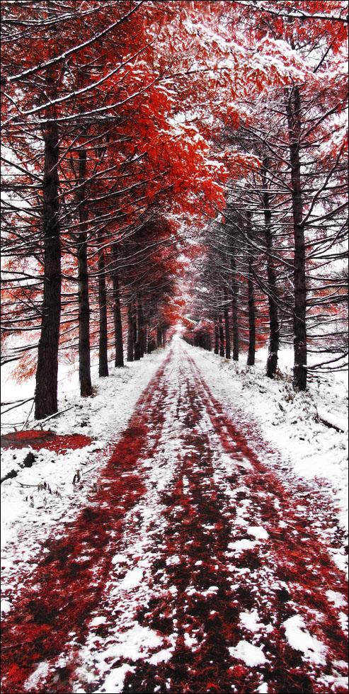 Speechless - Winter Wallpaper 967676 - Desktop Nexus Nature