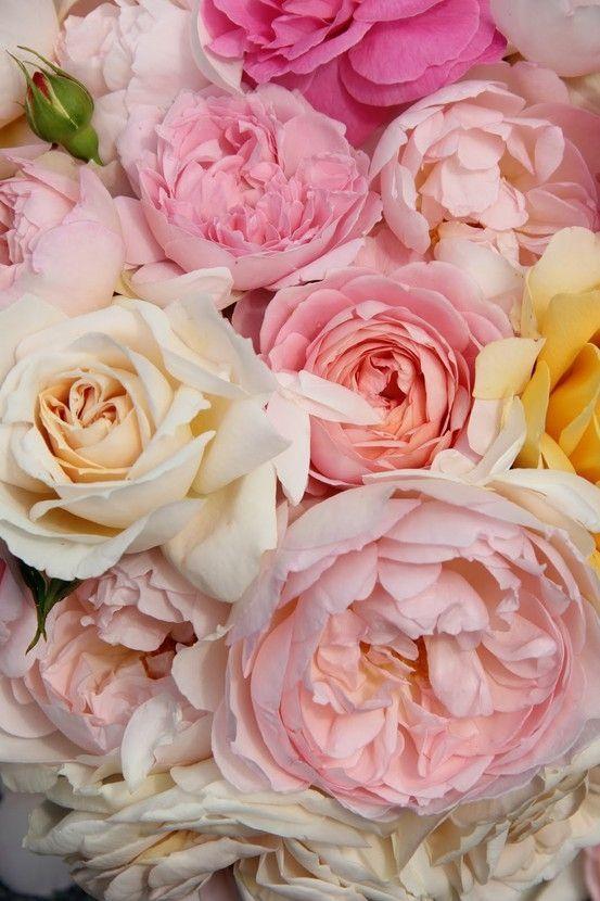 Me encantan las rosas en esos tonos   Me gusta   Pinterest