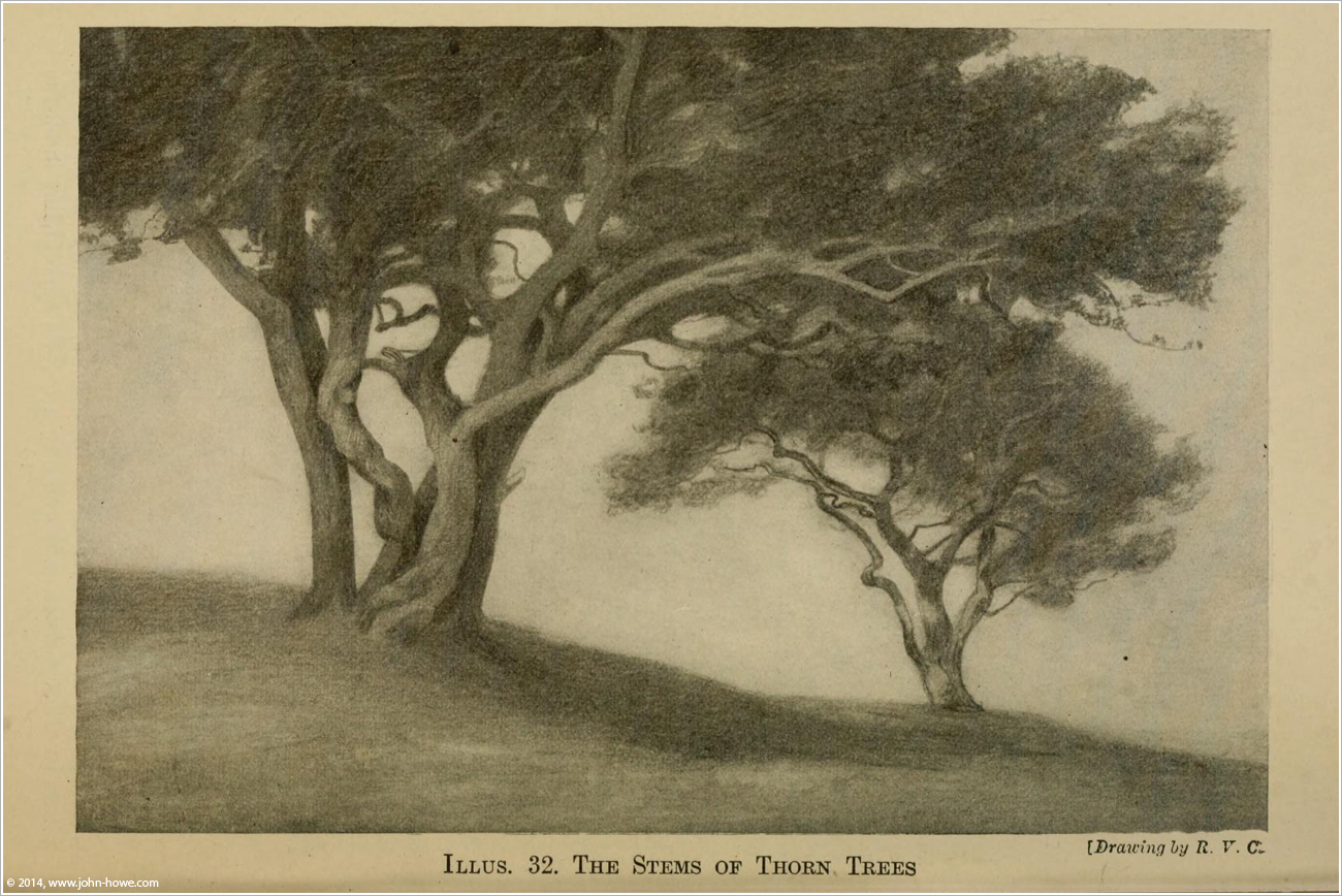 THE MEMORY OF TREES | John Howe #395177 on Wookmark