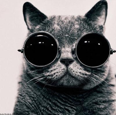 Katten met brillen « Froot.nl