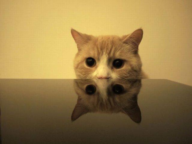 Spy Cats! hahaha - Socialphy