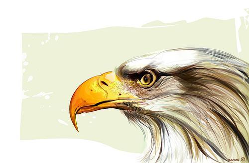 Bald Eagle © | Flickr - Photo Sharing!