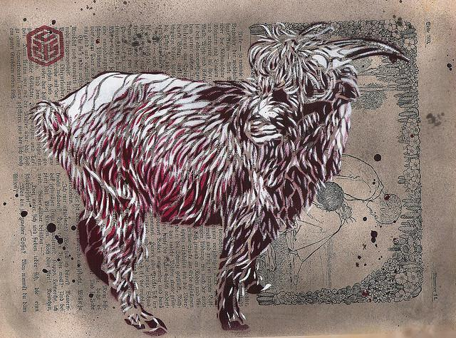 C215 - Indian Goat | Flickr - Photo Sharing!