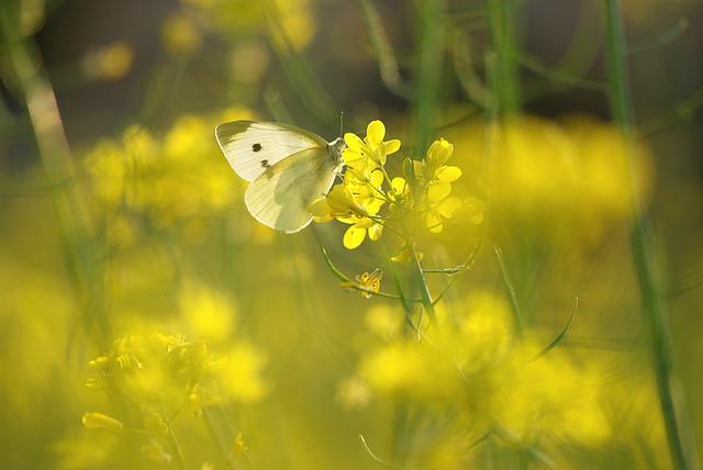 ??????????????   Flickr - Photo Sharing!