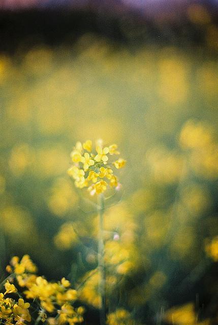 ????? | Flickr - Photo Sharing!