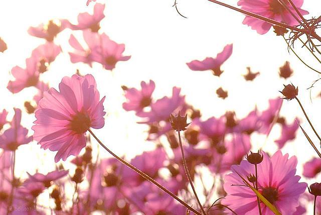 Flower sea   Flickr - Photo Sharing!