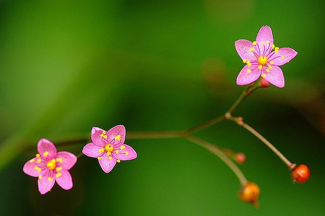 ?????... | Flickr - Photo Sharing!