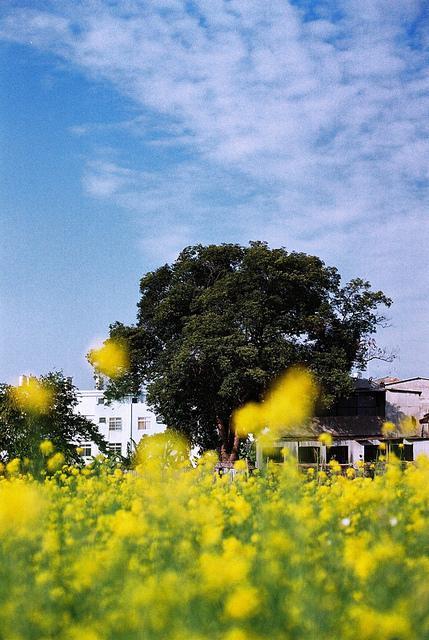 ??~??? | Flickr - Photo Sharing!