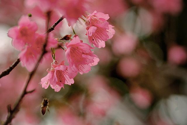 ????????   Flickr - Photo Sharing!