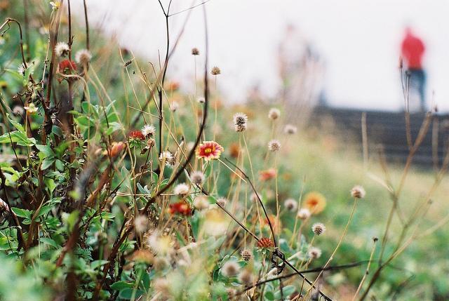 ???   Flickr - Photo Sharing!