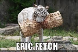 funny tiger pictures - Google Search