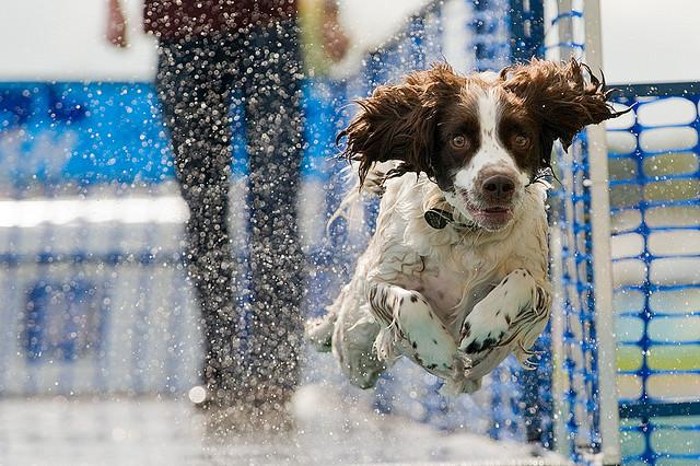 Jasper - Dash 'n' Splash | Flickr - Photo Sharing!