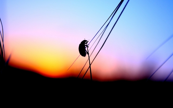 sunset insects silhouettes blurred ladybirds stalks Wallpaper