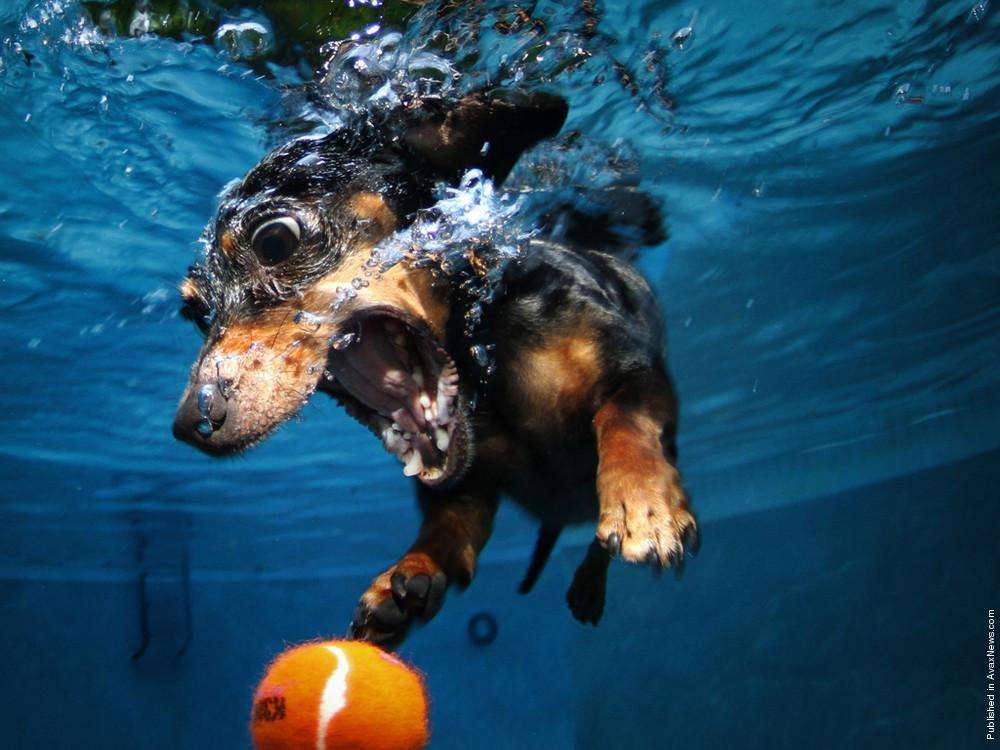 Seth Casteel – Underwater Dog Photographer
