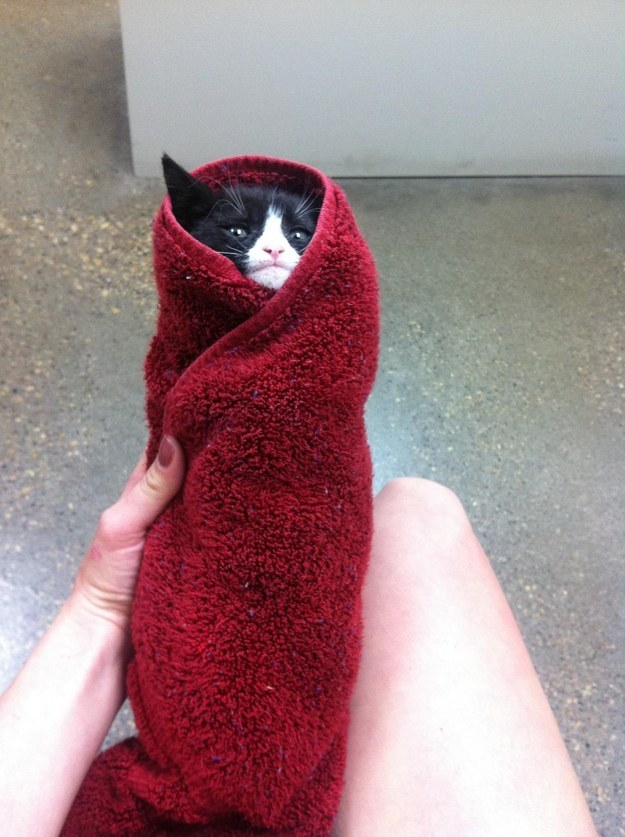 29 Cats Who Don't Even Know Anymore