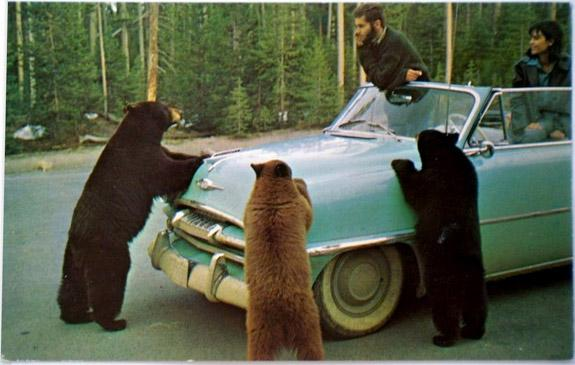 Think.BigChief | 1963 Yellowstone Postcard