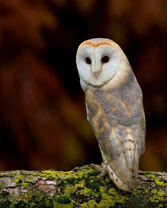Wildlife Photos by Dennis Binda | Pondly