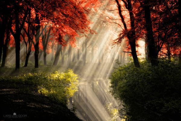 Nature Photography by Lars Van De Goor | Pondly