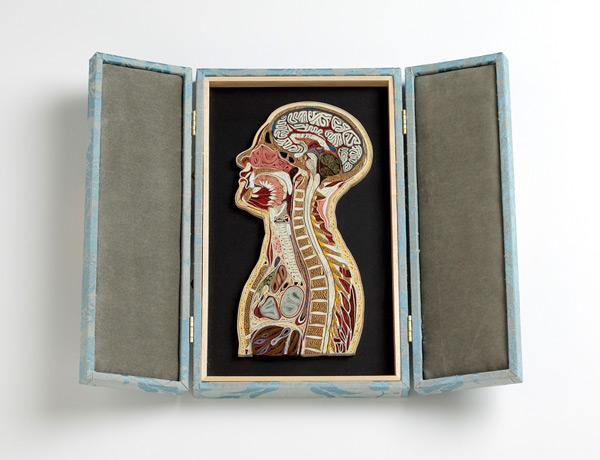 Anatomical Cross-Sections Made with Quilled Paper by Lisa Nilsson | Colossal