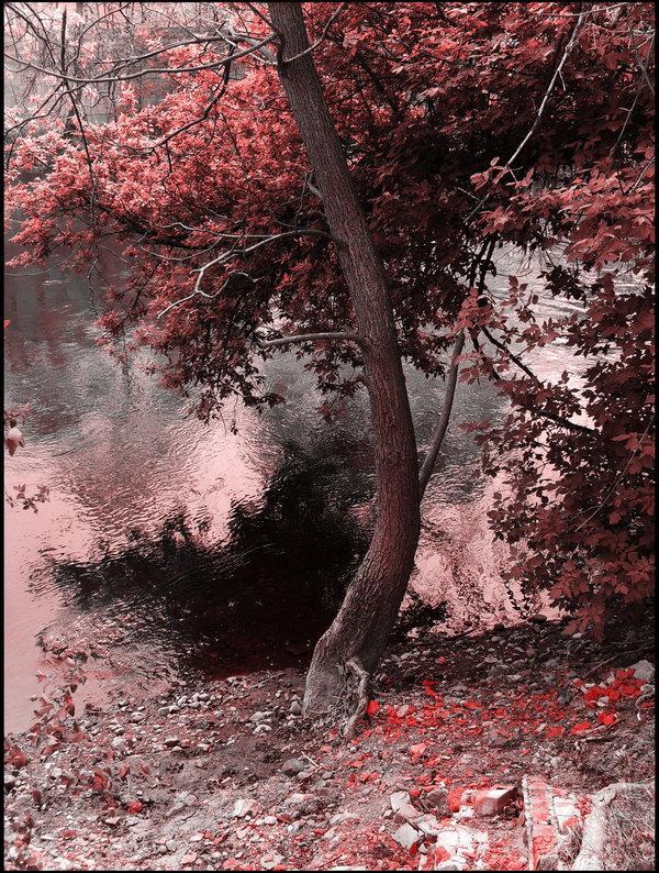 Cherry Blossom Special by !Zweiheimer