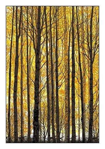 Trees / FFFFOUND!   this isn't happiness.™ Peter Nidzgorski, tumblr