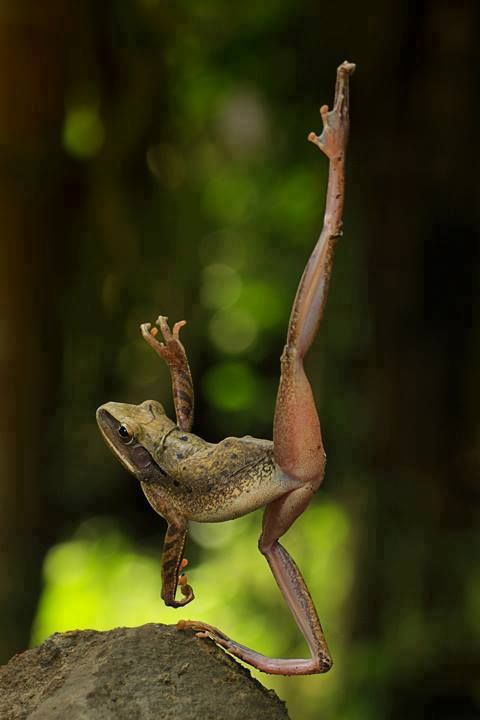 Frog ballet | - ART, FASHION & LIFESTYLE - | Pinterest