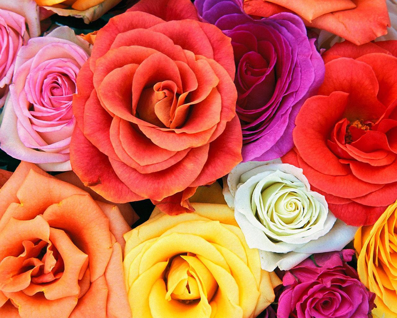 Love Blooms Roses, Bunch Of Flowers Wallpaper