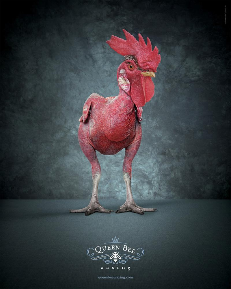 Queen Bee Waxing: Rooster - Advertising - Creattica