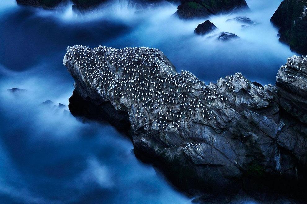 British Wildlife Photography Awards 2014 Winners » Design You Trust