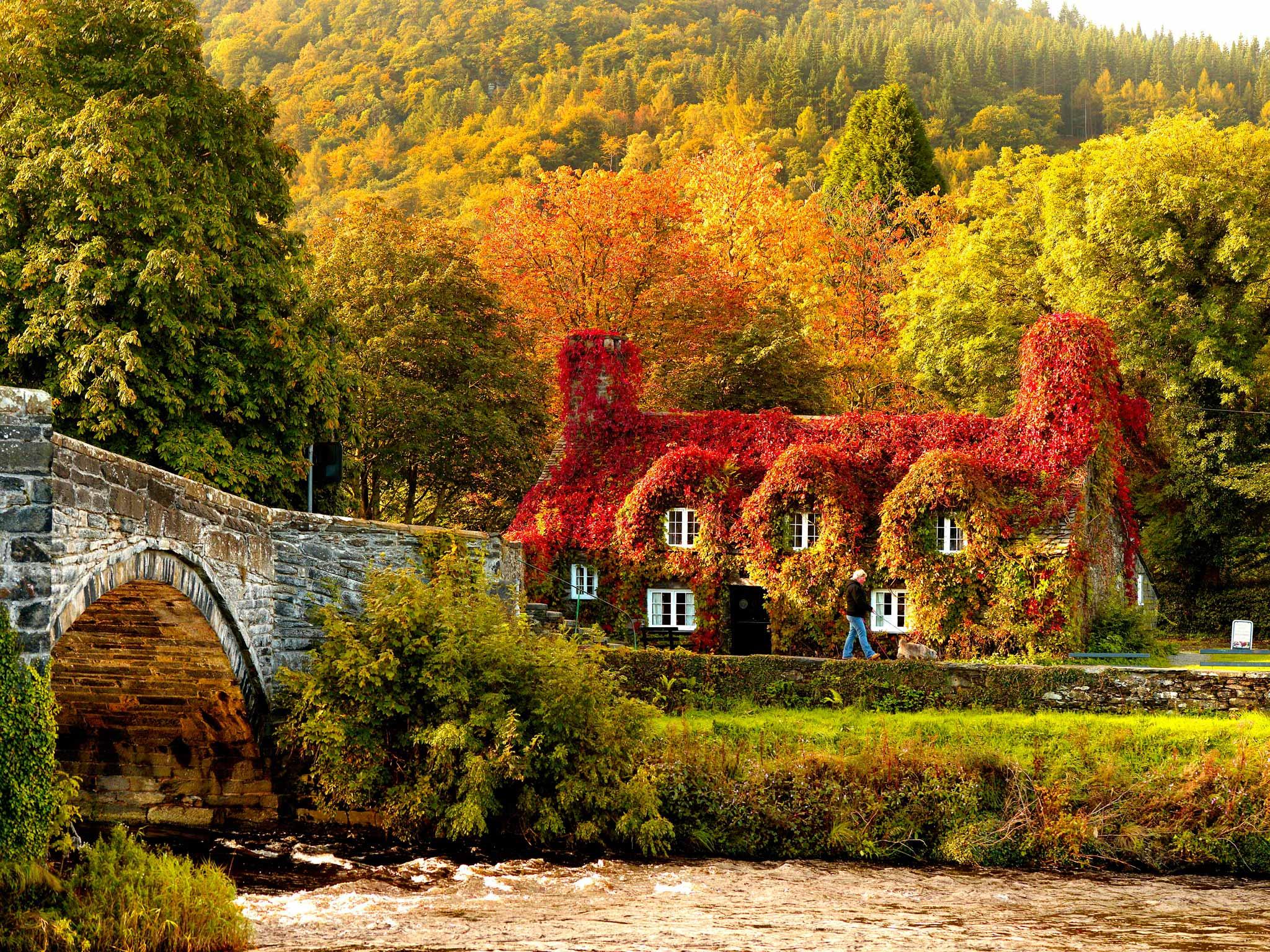 Autumn-colours-surround-t-009.jpg (JPEG Image, 2048×1536 pixels) - Scaled (50%)
