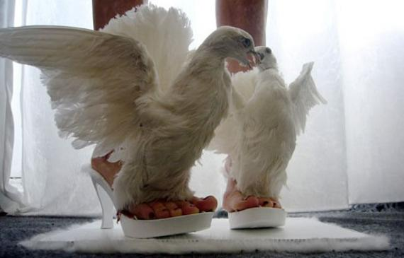 WTF: Real Life Dove Shoes | Incredible Things