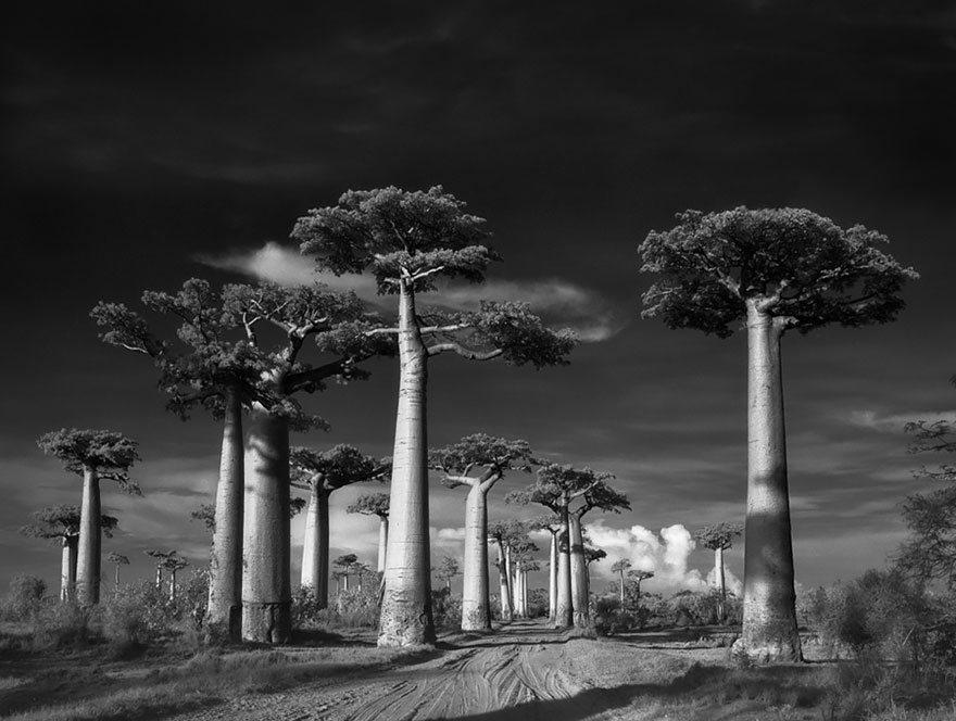 Ancient Trees: Woman Spends 14 Years Photographing World's Oldest Trees | Bored Panda