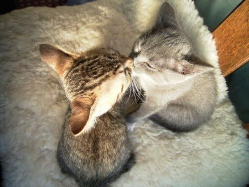 Cats / .