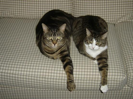 Here Kitty Kitty... / Synchronized cats. | Flickr - Photo Sharing!