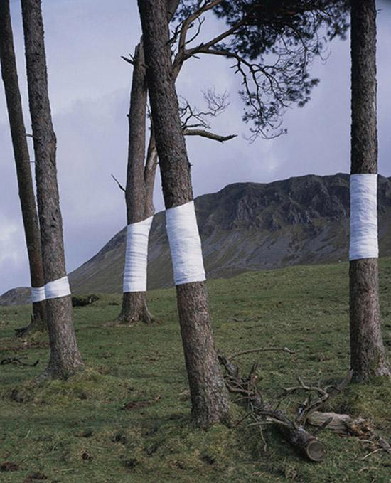 The Tree Line | Fubiz™