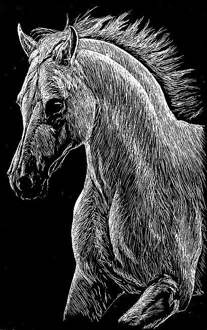 Pin by Pamela Joyce Hidden on Scratchboard   Pinterest