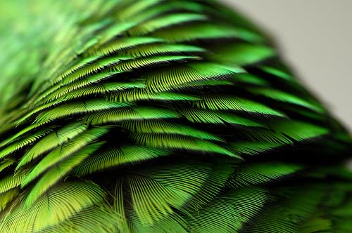 tumblr_lrlp6epaUh1qeq66co1_500.jpg (JPEG-Grafik, 500×332 Pixel)