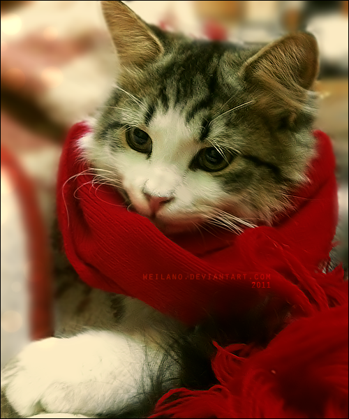 Oreo with red scarf by *weilano