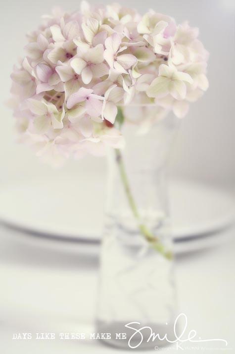 Flowers the wonder of / Fräulein Klein - my daily life