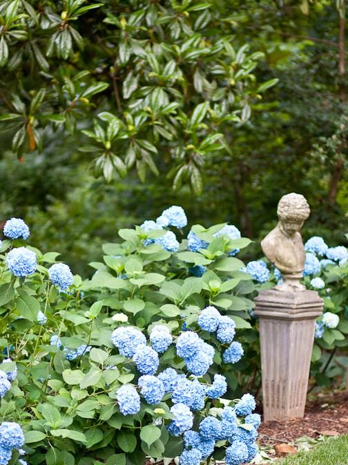 Garden / hydrangea heaven « And George « antiques, custom furniture, apothecary, clothes