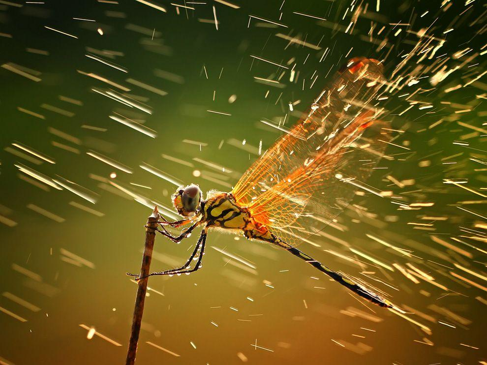 Dragonfly Picture – Animal Wallpaper - National Geographic Photo of the Day