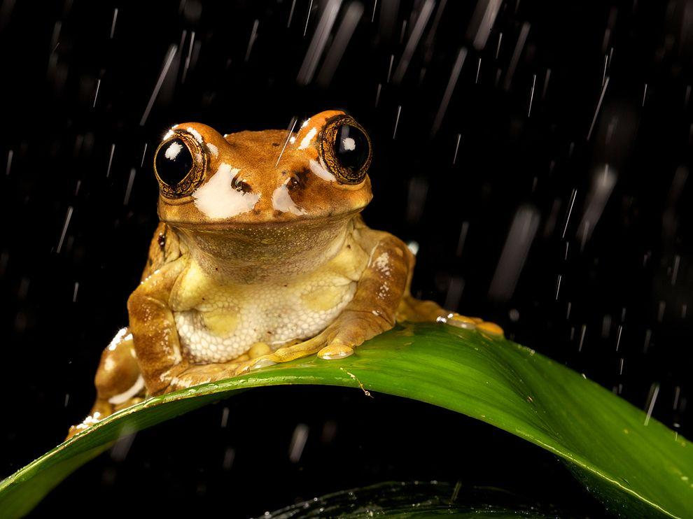 Frog Picture – Animal Wallpaper - National Geographic Photo of the Day