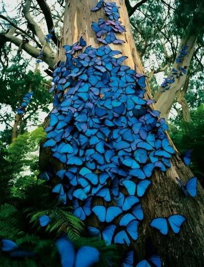 Tender wings / Butterflies by Kelvin Hudson on we heart it / visual bookmark #218036