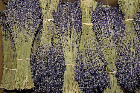 Flowers / Dried Lavender